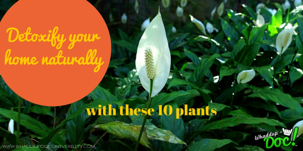 Detoxify your home naturally with these 10 plants